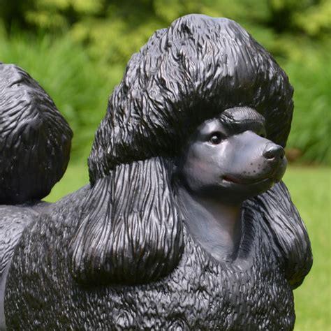 black poodle lifespan black poodle statue 23 quot size statue