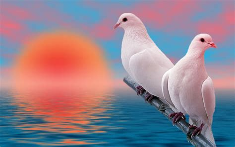 incredible images love birds high resolution