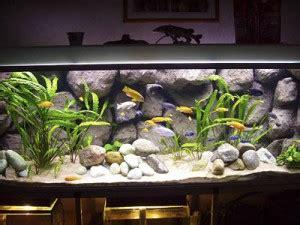 Aquarium Inrichting Ideeen by Cichliden Aquarium Inrichten Tips Voorbeelden