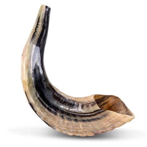 best shofar classical ram s horn shofar small judaica