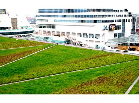 vancouver convention centre green roof flynn group of greenroofs com projects vancouver convention centre