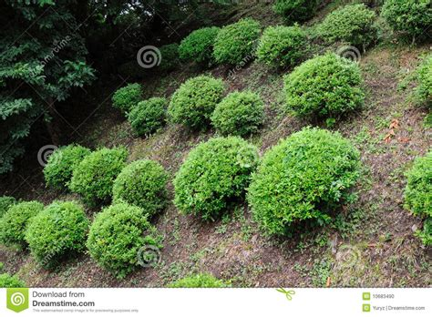 tiny petite small bushes stock photo image of small ground scenic