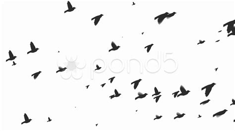 silhouette of flying birds hi res video 979826