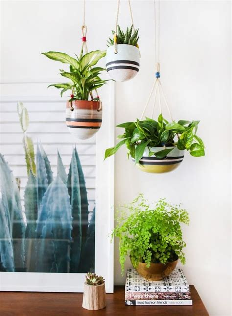 interior plant indoor plant guide becki owens