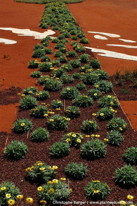 Cranbourne Botanical Garden Ad 233 La 239 De Cranbourne Botanical Gardens Australia