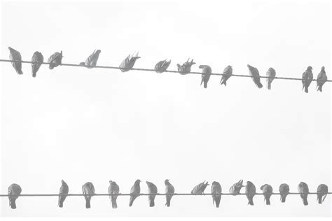 simple tumblr themes black background pretty backgrounds tumblr black and white birds www