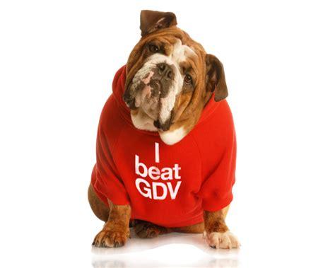 gdv in dogs bloat and gdv in dogs