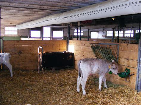 www stall de zwei cat 3000 schlauchbel 252 ftungen im k 228 lberstall