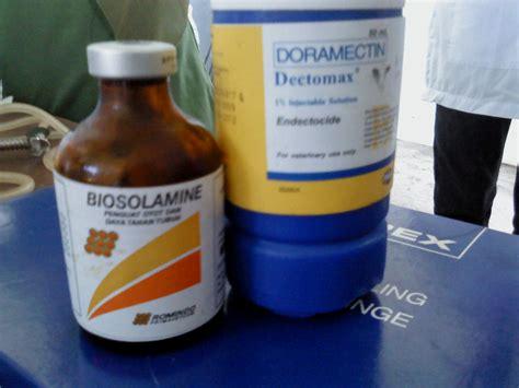Obat Cacing Ternak laporan kesehatan ternak pullorum berak kapur dan