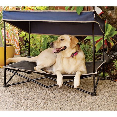 outdoor dog beds find your picky pup the perfect dog bed healthy paws pet