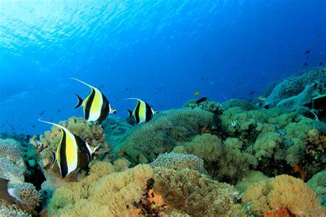 glass bottom boat vanuatu confira 5 atitudes que ajudam a preservar mares e oceanos