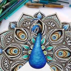 peacock drawing by kellylahar