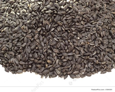 black sunflower seeds protein percent photo of black sunflower seeds