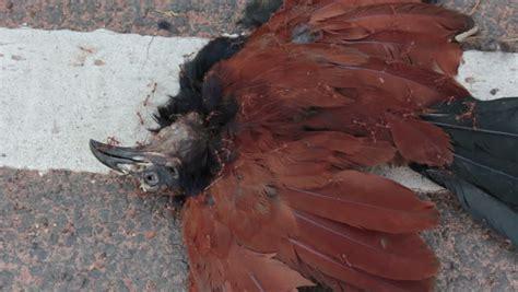 dead bird in backyard meaning dead bird definition meaning