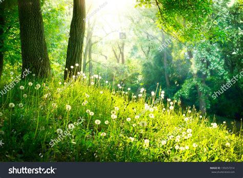 beautiful nature landscape in spring wallpapers and images spring nature beautiful scenery pinterest