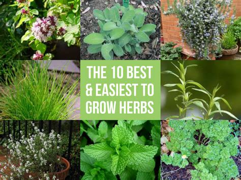easy herbs to grow inside 10 small space container herb garden ideas 10 important