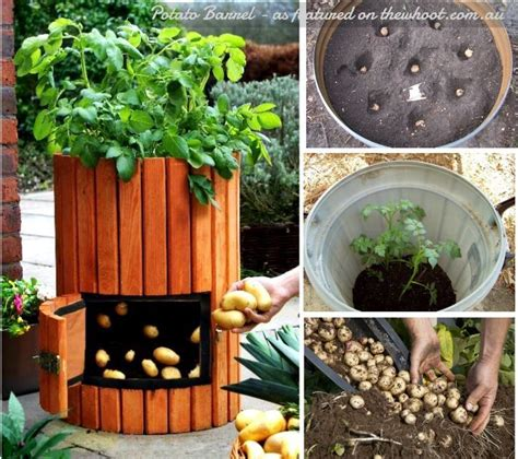 Stackable Potato Planter by 17 Best Ideas About Potato Planter On