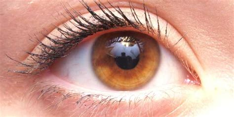 imagenes ojos raros los 6 colores de ojos m 225 s raros del mundo tkm m 233 xico