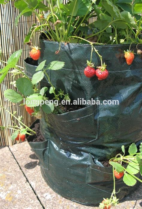Grow Bag Planter by Strawberry Grow Bags Pots And Planters For Strawberry