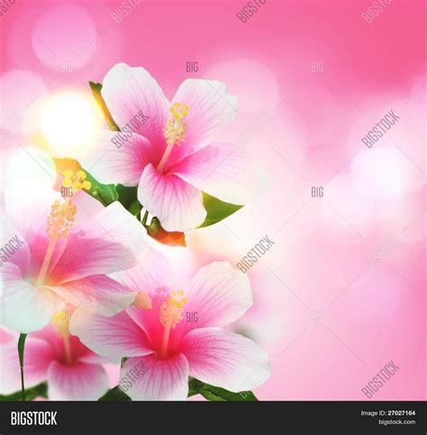 mooie bloemen afbeeldingen mooie bloemen stock foto stock afbeeldingen bigstock