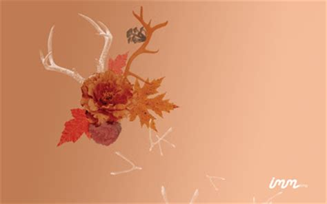 desktop wallpaper quirky quirky fall wallpaper freebies how about orange
