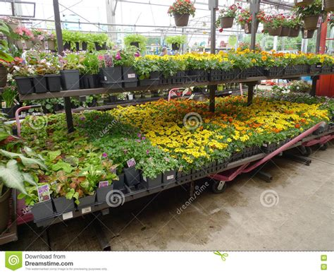 Lowes Garden Center Flowers by Home And Garden Store In Stock Image