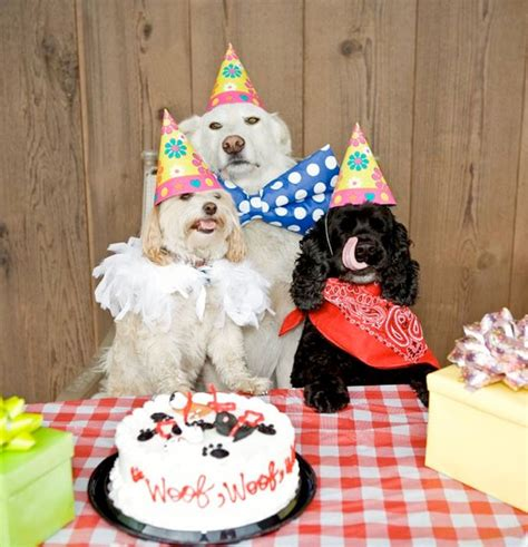 birthday dogs 10 cutest pictures of birthday dogs pets world