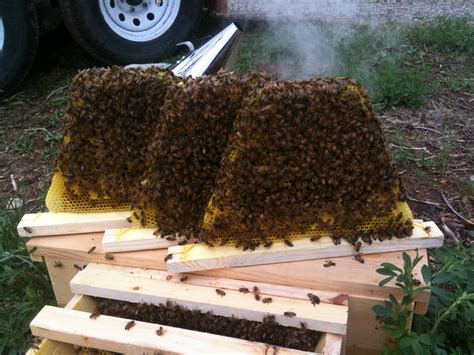 top bar hive for sale top bar hive for sale and quite the rage apis hive