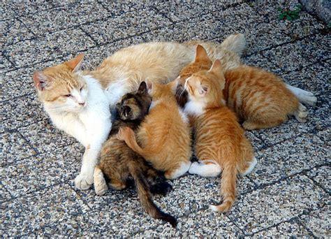 wann kommen katzenbabys sterylizacja jaką metodę antykoncepcji dla kota wybrać