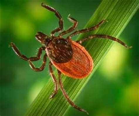 how to get tick how to get rid of ticks how to get rid of stuff