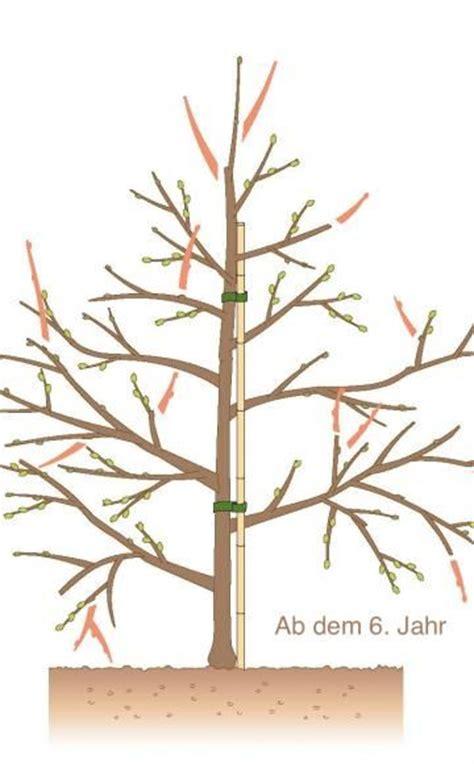wann bäume schneiden obstb 228 ume schneiden 10 tipps gardens garten and bonsai