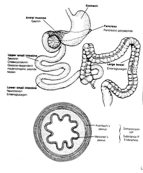 Undigested In Stool Pancreatitis pancreas undigested food in stool pancreas