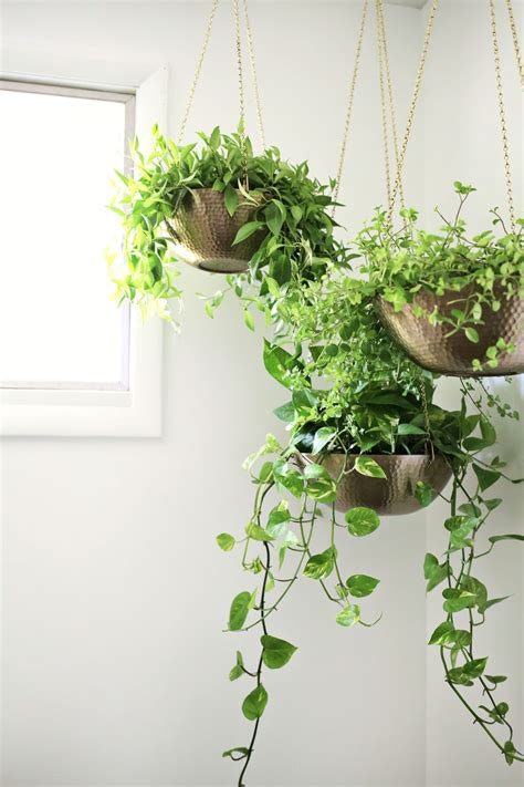 plants indoors hanging planters out of metal bowls love this click