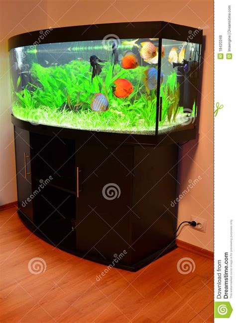 beautiful home fish tanks beautiful home aquariums modern diy art designs