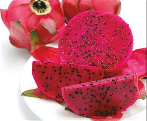 Bijibenihbibit Buah Naga Mix 1 jual benih biji buah naga merah dragonfruit kembang sepatu