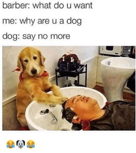 what do dogs say barber what do u want me why are u a say no more barber meme on
