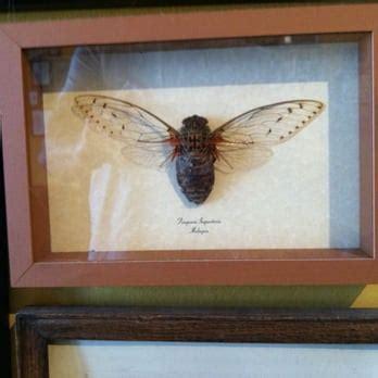 cicada tattoo seattle wa 98133 angies list cicada tattoo 143 photos 60 reviews tattoo parlours