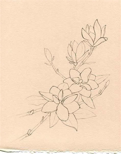 june tattoo designs 1000 ideas about camellia flower pictures on