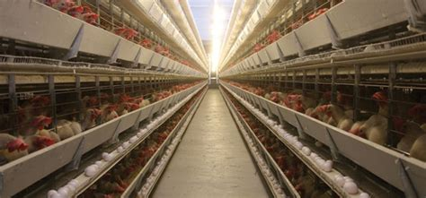 food quality  safety practices  poultry food
