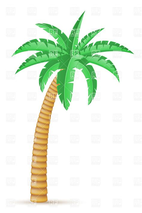 tropical palm trees tropical palm tree isolated on white background royalty