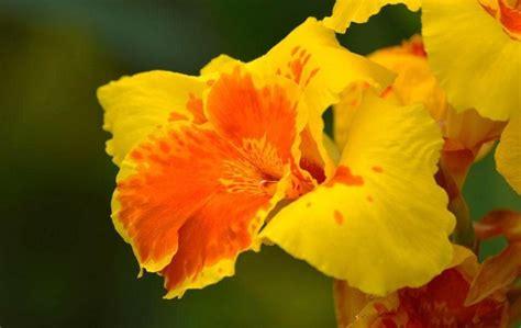 imagenes de flores del co las 15 flores m 225 s bonitas con fotos 174 florespedia