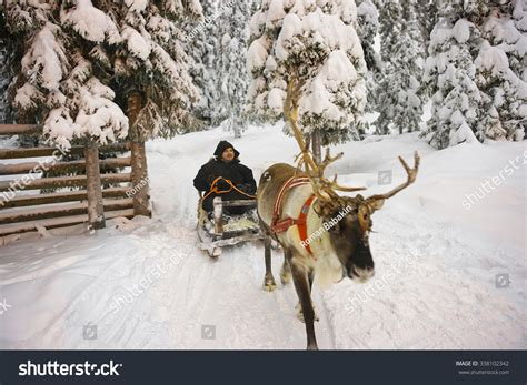 where to buy a sled and reindeer for the roof of your house winter lapland reindeer sled racing in ruka in finland selective focus stock photo 338102342