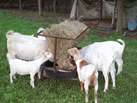 Goat Hay Rack Feeder by Goat Feeder W Hay Rack