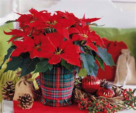 christmas table decorations  ideas  holiday table
