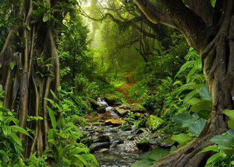 tropical jungle  river photo backdrop vinyl cloth high