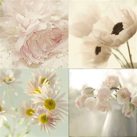 Shabby Chic Wall Decor Flower Photographs Four By Judystalus Shabby Chic Wall Decals