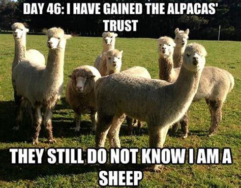 Funny Meme Captions - funny image animal love funny 30 funny animal captions