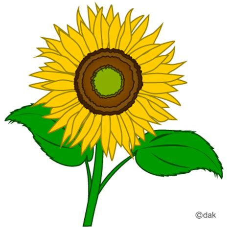 Sunflower Outline Png by Sunflower Clip Clipart Free Clipart Microsoft Clipart Clipartcow Clip Library
