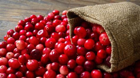 can dogs eat cranberries 10 reasons why your won t eat barking royalty