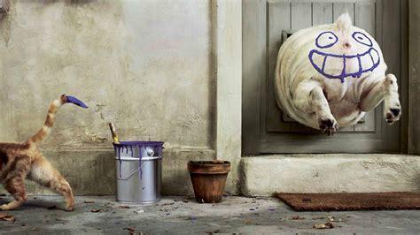 wallpaper chat humour fond d ecran humour de chat chien wallpaper